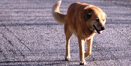 La recollida de cans abandonats ara serà tasca de la Fundació Natura Park.