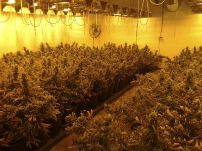 Un laboratori com aquest amb més de 100 plantes s'hauria desmantellat avui en el carrer Concòrdia.